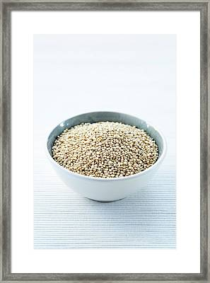 Quinoa Seed Framed Print by Gustoimages