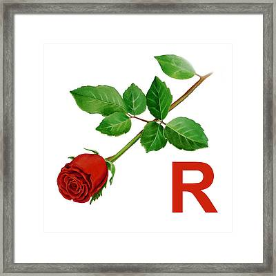R Art Alphabet For Kids Room Framed Print by Irina Sztukowski