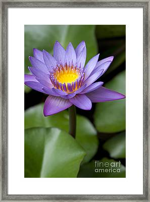 Radiance Framed Print by Sharon Mau