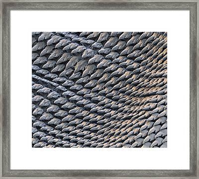 Radula Of A Slug, Sem Framed Print by Eye of Science