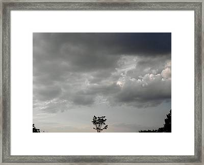 Rain On Me Said The Little Tree Framed Print by Kate Gallagher