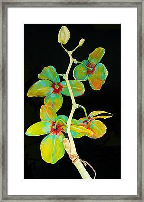 Rainbow Orchids Framed Print by Jean Cormier