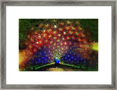 Framed Print featuring the photograph Rainbow Peacock by Jodie Marie Anne Richardson Traugott          aka jm-ART