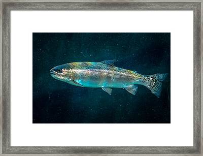 Rainbow Trout Framed Print by Brian Stevens