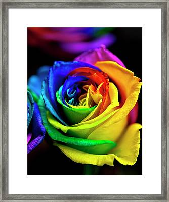 Rainbowed Rose Framed Print by Ian Gowland