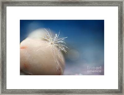 Raindrops Framed Print by Eden Baed