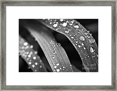 Raindrops On Grass Blades Framed Print