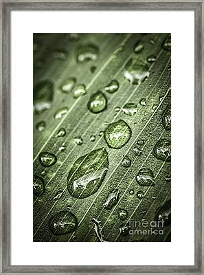 Raindrops On Green Leaf Framed Print by Elena Elisseeva