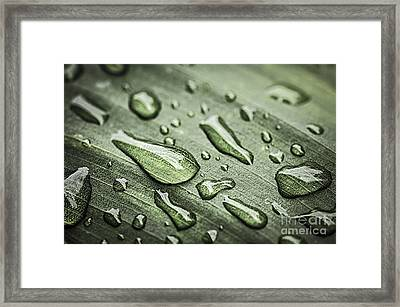 Raindrops On Leaf Framed Print by Elena Elisseeva