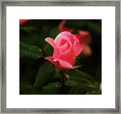 Framed Print featuring the photograph Raindrops On Roses by Roseann Errigo