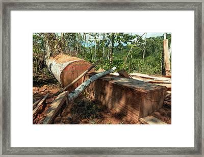 Rainforest Tree Cut For Planks Framed Print