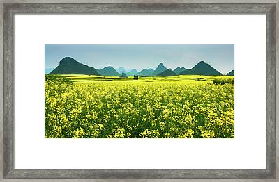 Rapeseed Flowers Framed Print by Sunnyha  Images