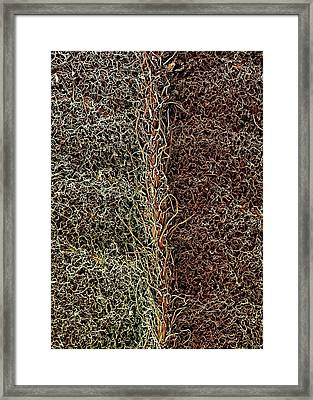 Raspberry Leaf Trichomes Framed Print