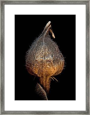 Raspberry Seed Framed Print by Stefan Diller
