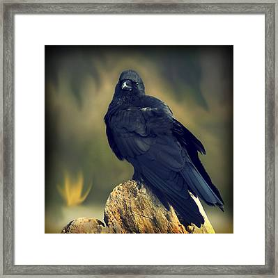 Framed Print featuring the photograph Raven by Yulia Kazansky