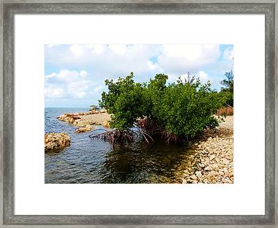 Framed Print featuring the photograph Reclamation 7 by Amar Sheow