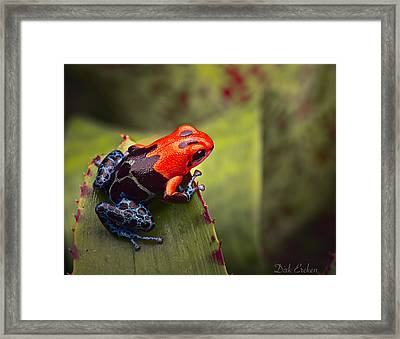 Red Blue Poison Dart Frog Framed Print by Dirk Ercken