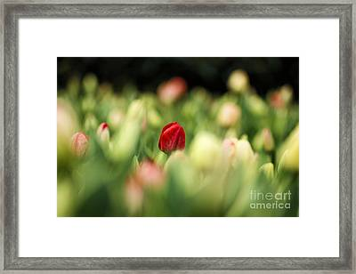 RED Framed Print by Darren Fisher
