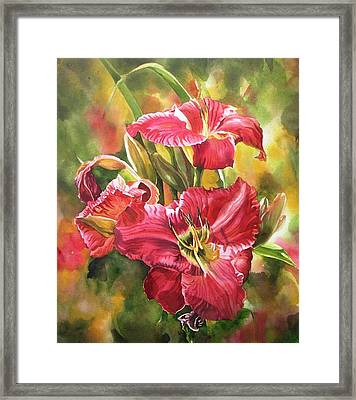 Red Daylilies Framed Print by Alfred Ng