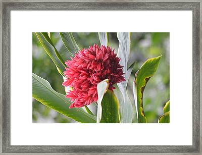 Red Flower Framed Print by Michelle Hoffmann