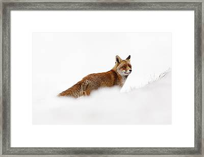 Red Fox In A White World Framed Print by Roeselien Raimond