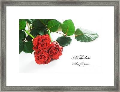 Red Fresh Roses On White Framed Print by Michal Bednarek
