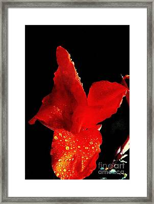 Red Hot Canna Lilly Framed Print by Michael Hoard