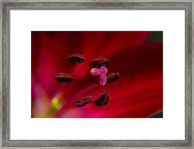Red Lady Framed Print by Steffen Gierok
