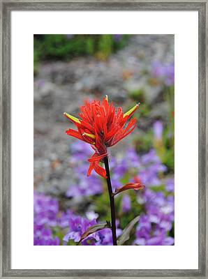 Red Paintbrush  Framed Print by Robert  Moss