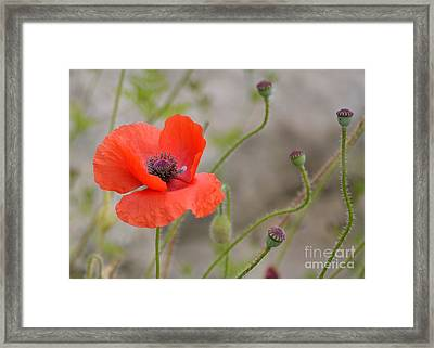 Framed Print featuring the photograph Red by Lisa L Silva
