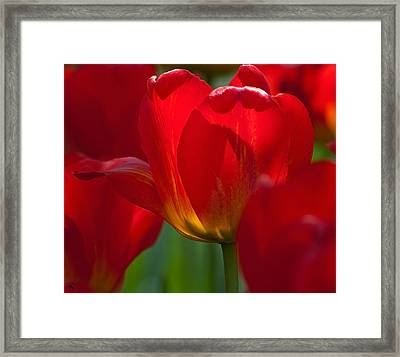 Red Framed Print by Randolph Fritz