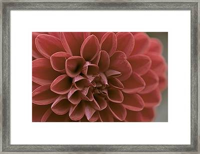 Red Framed Print by Samantha Eisenhauer