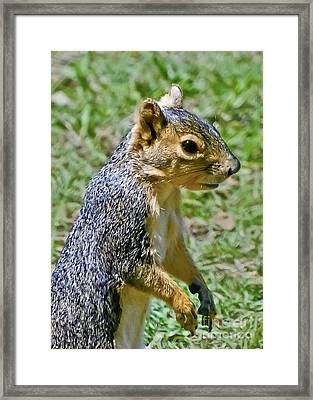 Red Squirrel Framed Print by Bob and Nadine Johnston