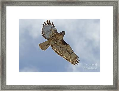 Red-tail Hawk #3094 Framed Print by J L Woody Wooden