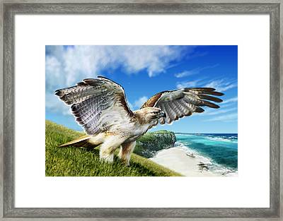 Red-tailed Hawk Framed Print by Owen Bell