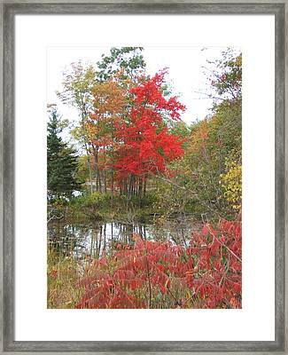Red Tree Framed Print by Margaret McDermott