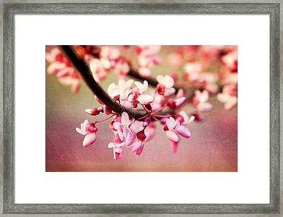 Framed Print featuring the photograph Redbud Blossoms by Trina  Ansel