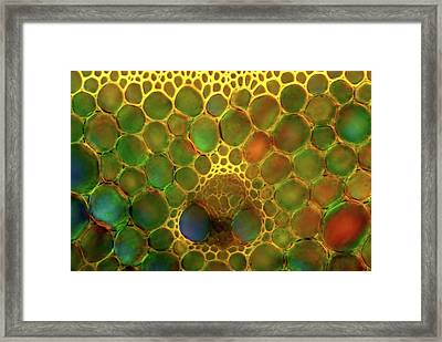 Reed Stem Framed Print by Marek Mis