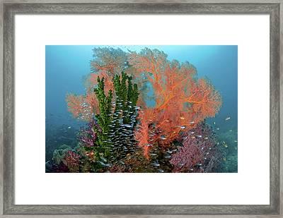 Reef Scenics, Raja Ampat Islands, Irian Framed Print
