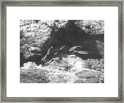 Reef Tide Pool Framed Print by Frank Wilson
