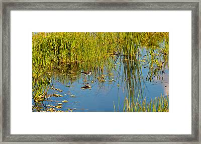 Reflection Of A Bird On Water, Boynton Framed Print by Panoramic Images