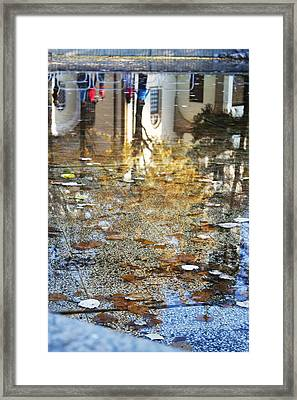 Reflections Framed Print by Lucy D