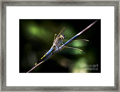 Resting Dragonfly Framed Print by Jorgo Photography - Wall Art Gallery