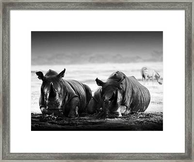 Resting In The Rain Framed Print by Mike Gaudaur