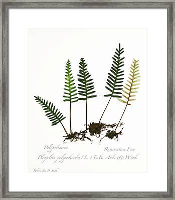 Resurrection Fern 2 Framed Print