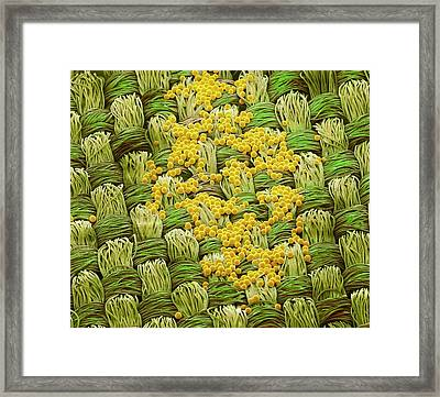 Retroreflective Beads Framed Print