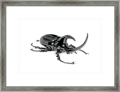 Rhinoceros Beetle Framed Print by Tomasz Litwin
