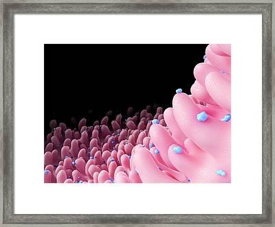 Rhinovirus Framed Print by Maurizio De Angelis