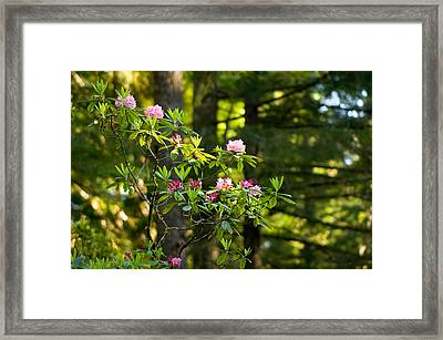 Rhododendron Flowers In A Forest, Del Framed Print by Panoramic Images