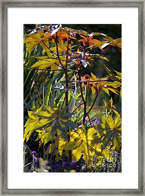 Ricinus Communis Gibsonii Framed Print by Dr. Keith Wheeler
